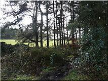 SK2962 : Farley Moor - Woodland  and Field by Alan Heardman