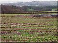 SX4471 : Tracks across the field by John Poyser