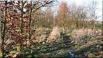 SK4263 : Footpath by Alan Walker