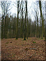 SU8115 : Beeches, Phillis Wood by Simon Carey