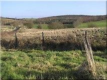 H3159 : Crossan Townland by Kenneth  Allen