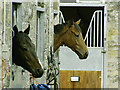 SE1287 : Middleham racing stable by Anthony Harrison