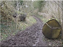 SU7076 : On the bridleway to Tanners Lane by Graham Horn