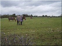 SU7077 : Paddock near Tanner's Farm by Graham Horn