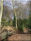 SU6978 : Old lime pit in Bardolph's Wood by Graham Horn