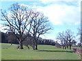 SO4133 : Late winter treescape by Jonathan Billinger