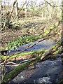 NS4738 : Tree Ferns by wfmillar