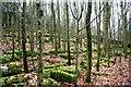 SD5078 : Limestone, Beech Wood by Mick Garratt