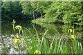 NS4760 : Paisley - Glen Park - Bottom Linn by Vic Nelson