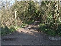TQ2352 : Footpath at Mogador by John Hilton