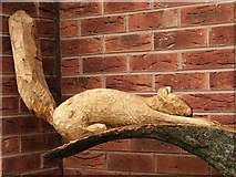 SD2806 : Reclining Squirrel by Christine Westerback