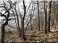 NN6058 : Loch Rannoch shoreline by Richard Webb