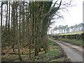 NS3310 : Roadside Woodland. by wfmillar
