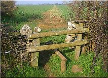 SP2604 : Stile near Alvescot by Martin Loader