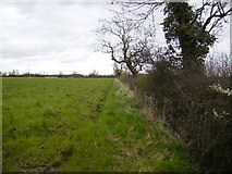 SE7674 : Field margin off Low Lane by Phil Catterall
