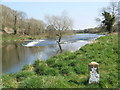 N9170 : Weir on Boyne Near Stackallen by JP