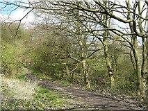 SJ8149 : Footpath at Wood Lane by Steve Lewin