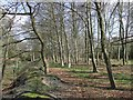SJ9512 : Woods by old Railway, Pillaton, Staffordshire by Roger  Kidd