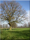 SE1223 : Path past Barker Royd, Southowram by Humphrey Bolton