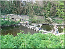 O1429 : Dodder Stepping Stones by JP
