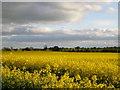 NZ3626 : English farmland at its loveliest by Carol Rose
