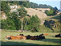 SK1258 : Cattle in Beresford Dale by William Metcalfe