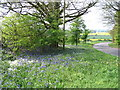 SP2874 : Bluebells, Crackley Lane by E Gammie