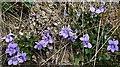 NJ3548 : Violets by Anne Burgess