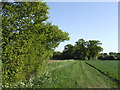 TM1368 : Field edge and copse by Jonathan Billinger