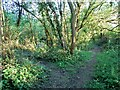 SP1345 : Footpath meets bridleway by David Luther Thomas