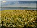 SU6803 : Saltmarsh vegetation Farlington Marshes by Chris Gunns