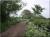ST6594 : Woodend Lane by Derek Harper