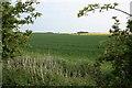 NU1830 : Field, Ewe Hill by Mick Garratt
