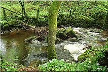 SX5751 : Yealmpton: the river Yealm by Martin Bodman