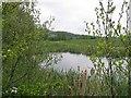 NZ3341 : Pond near Shadforth by Roger Smith