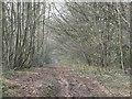 SO5279 : Thriftwicket Lane by Richard Webb