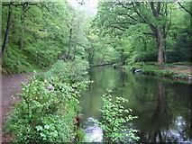 SX7489 : River Teign upstream of Fingle Mill Head Weir by Nigel Cox