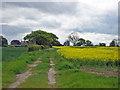 SJ6972 : Farm track to Melvin Holme by Mike Harris