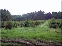 SU1012 : Young Plantation near Daggons by Maigheach-gheal