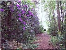 SU1012 : Woodland Path by Maigheach-gheal
