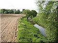 SJ6217 : River Tern. by Paul Beaman