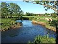 SY2999 : River Axe by Derek Harper