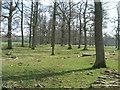 NY6222 : Trees in early spring sun nr Keld farm by glyn swain