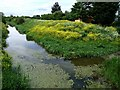 TF3558 : East Fen Catchwater Drain, Stickford by Dave Hitchborne