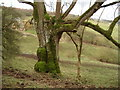 SP0833 : Tree at Great Brockhampton Farm by Trevor Rickard