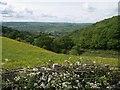 SO3179 : Cwm on north side of Pen-y-wern Hill by Gill  Stott