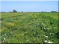 TF1219 : Conservation ditch, Bourne South Fen, Lincs by Rodney Burton