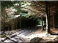 SH7819 : Forest track by liz dawson