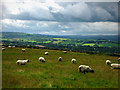 C2500 : View west from Beltany stone circle by Chris Gunns