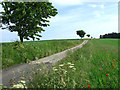 SO6695 : Farmers' Road through Fields, Shropshire by Roger  Kidd